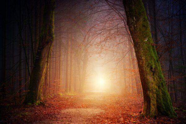 Paixão, Propósito, Felicidade: como encontrar o Significado da vida?