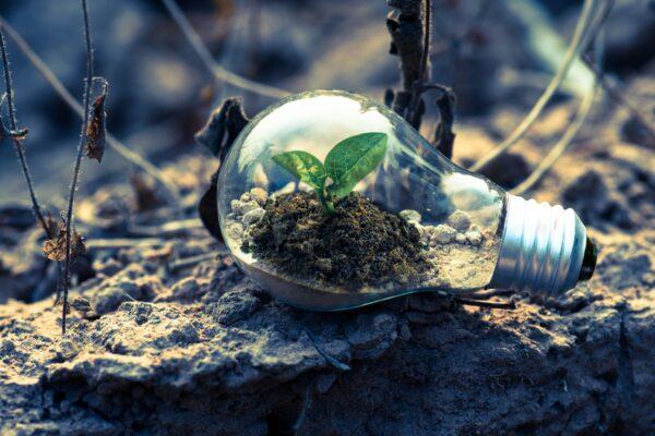 Descobre se tens uma Mentalidade Fixa ou de Crescimento
